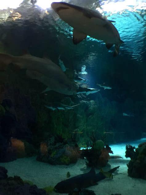 Shark Encounter Sea World Photos Aquariums