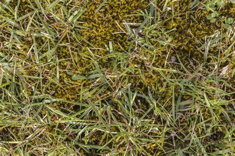 Moos Im Rasen Bekaempfen by Eisend 252 Nger Moos Im Rasen Bek 228 Mpfen 183 Ratgeber Haus Garten