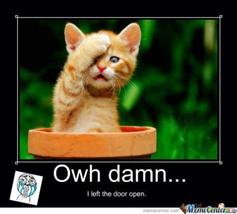 Cute Kitten Memes - cute cat says by recyclebin meme center