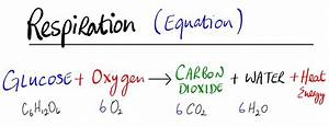 Respiration Equation Related Keywords & Suggestions ...