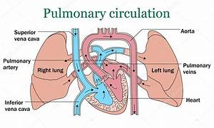 Pin By Learnanatomy On Anatomy Of The Respiratory System