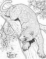 Leopard Coloring Pages Tree Animals Wildlife Realistic Wild Adults Printable Jaguar Cheetah Cat Drawings Super Detailed Trees Lions Tigers sketch template