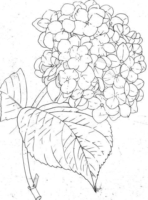 Hydrangea-line in 2019 | Fabric painting, Coloring pages, Drawings