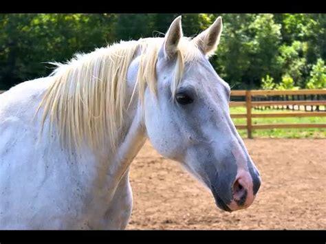 horse quarter appendix horses collection