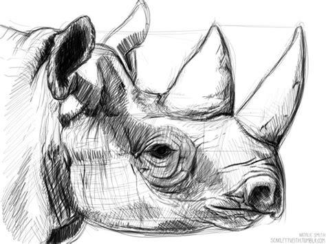 rhino sketch rhinos  sketches