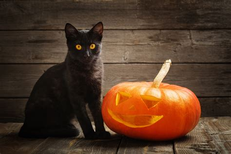 Halloween Is Upon Us Protecting The Black Cat Love Ferplast