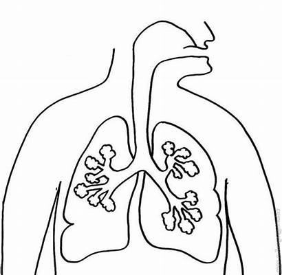 Lungs Coloring Human Pages Anatomy Lung Printable