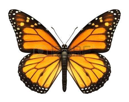 las 25 mejores ideas sobre tatuaje de monarca en tatuajes de mariposa tatuajes de