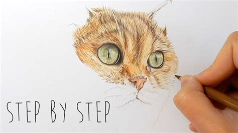 step  step   draw color realistic cat fur