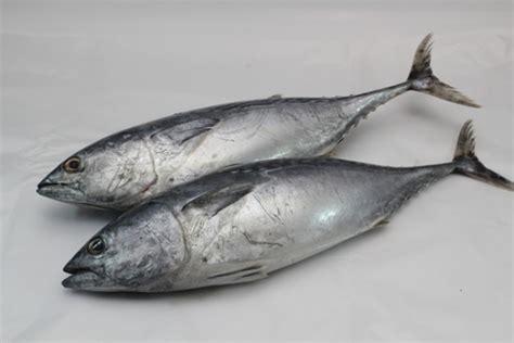 jenis ikan patut dielakkan bagi penderita ekzema gerd