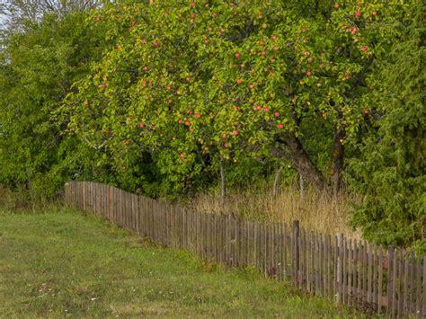 Kristīnes kārtainā ābolkūka smilšu mīklas groziņā ...