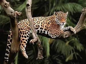 Top 10 Facts About Jaguars Rainforest Cruises
