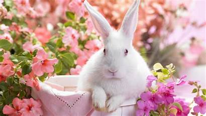 Bunnies Rabbits Wallpapers Pets Definition Updated Views