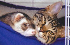 do cats and rabbits get along