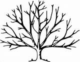 Tree Bare Template Clipart Winter Coloring Library sketch template
