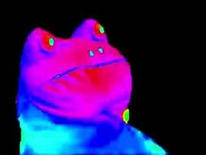 MLG Frog Meme