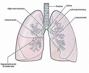 Easy Notes On  U3010lungs U3011learn In Just 4 Minutes   U2013 Earth U0026 39 S Lab