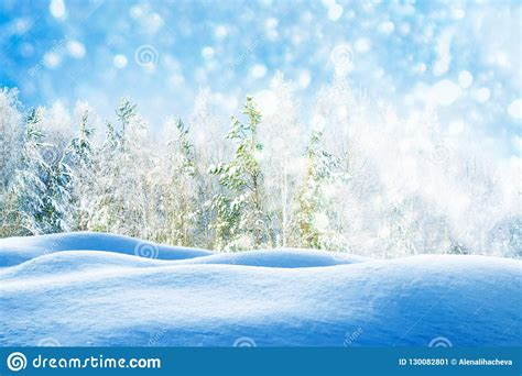 Frozen Winter Forest With Snow Covered Trees Stock Image