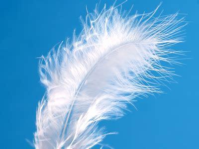 Signs From Angels Beliefnet