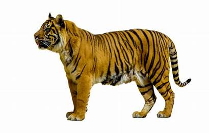 Animal Wild Animals Cartoon Clipart Transparent Pluspng