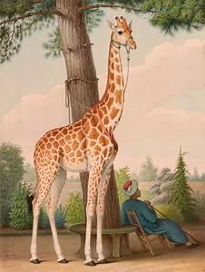 Zarafa (giraffe) - Wikipedia  Giraffe