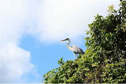 Summer Cobija Season Pando Hotels Birds Bolivia