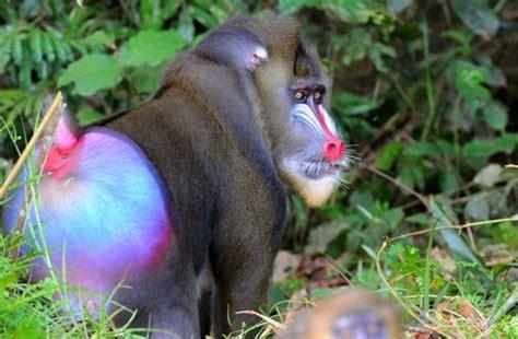 animales en peligro de extincion buscar  google