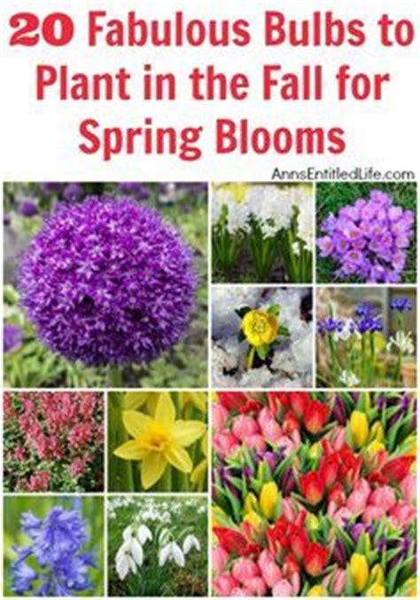 the 25 best bulb flowers ideas on