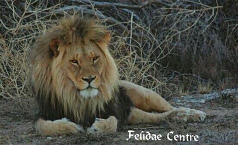 Felidae Centre (kimberley)