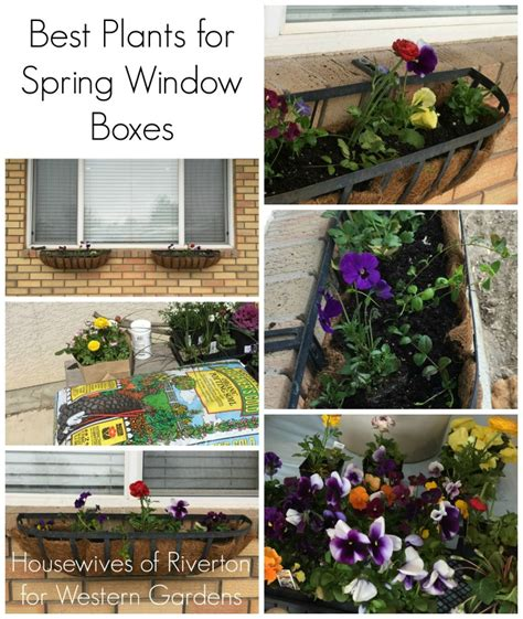 Best Window Plants by Best Plants For Window Boxes Western Garden Centers
