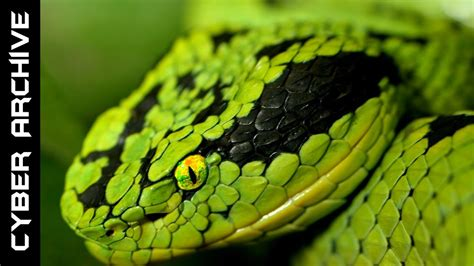 15 Most Venomous Snakes in the World - YouTube