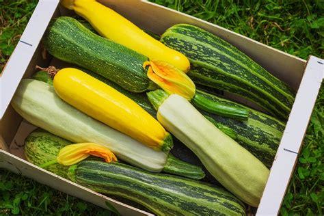Kann Zucchini Roh Essen by Brokkoli Und Zucchini Roh Essen Darf Das Giga