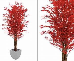 Baum Mit Roten Blättern : ficus benjamini multi stamm natur rote 1548 bl tter g nstig kaufen ~ Eleganceandgraceweddings.com Haus und Dekorationen