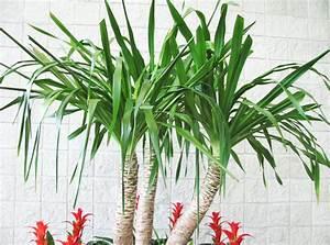 Vastu Plants For Your House The Royale