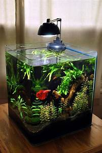 Petit Aquarium Design : 25 best ideas about petit aquarium on pinterest ~ Melissatoandfro.com Idées de Décoration