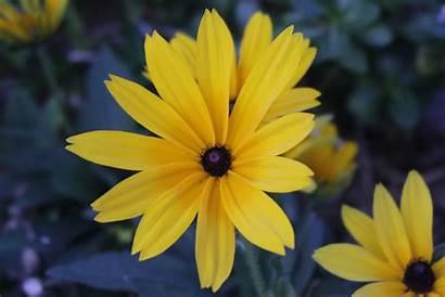 Pretty Flowers Yellow Desert Garden Mellow Monday