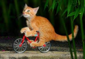 cat on a bike animals on bike beautifull pictures and wallpapers