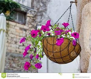 Hanging Flowers Basket Royalty Free Stock Photo - Image