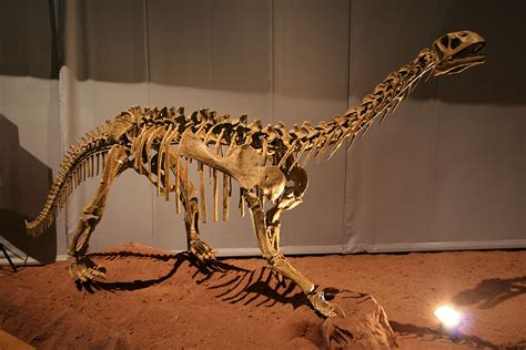 Bellusaurus Wikipedia
