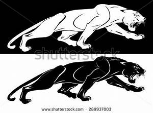 Panther Stock Photos, Images, & Pictures | Shutterstock