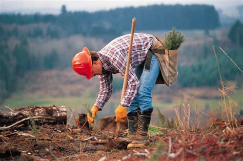 Career Spotlight Conservation Scientists And Foresters