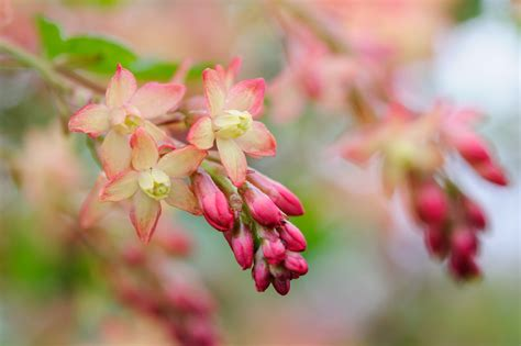 flowers to plant in april top 28 flowers to plant in april what flowers should you plant in april plants in egypt