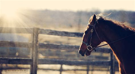 Professional Horse Jumping Photography Wwwimgkidcom