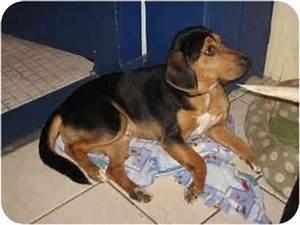 Joey: Prison Program | Adopted Dog | Cincinnati, OH ...