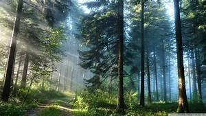 Forest Wall Paper v-sanctuary com