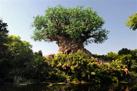 Watch The Tree Of Life Grow At Disney's
