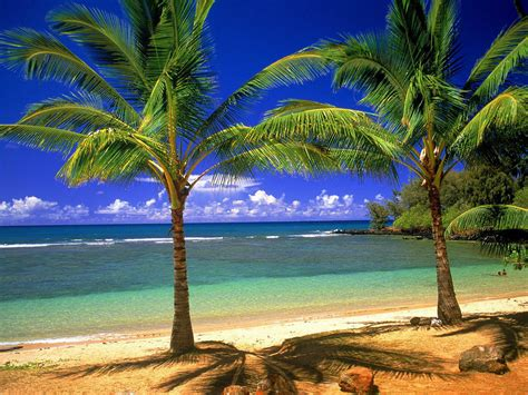 Xs Wallpapers Hd Coconut Tree Wallpapers