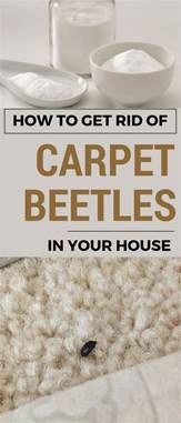 how to get rid of a on your phone how to get rid of carpet beetles in your house