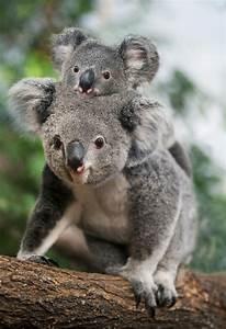 Pin Koala-bebe on Pinterest