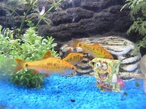Welche Fische Passen Zusammen Aquarium : kann ich ein tier haben welches haustier passt zu uns ~ Lizthompson.info Haus und Dekorationen